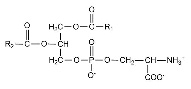 Neuro-Peak-Phosphatidylserine